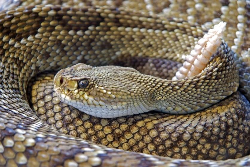 jad węża w kosmetykach staje się coraz bardziej popularny_codziennik kosmetyczny