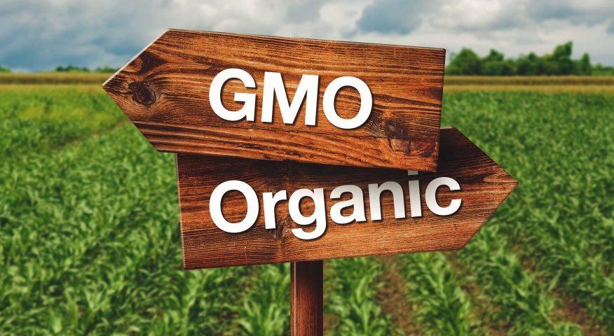 GMO w kosmetykach_Codziennik Kosmetyczny