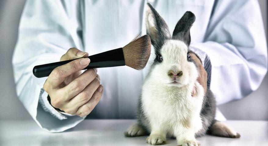 Testowanie kosmetyków na zwierzętach-CodziennikKosmetyczny.pl