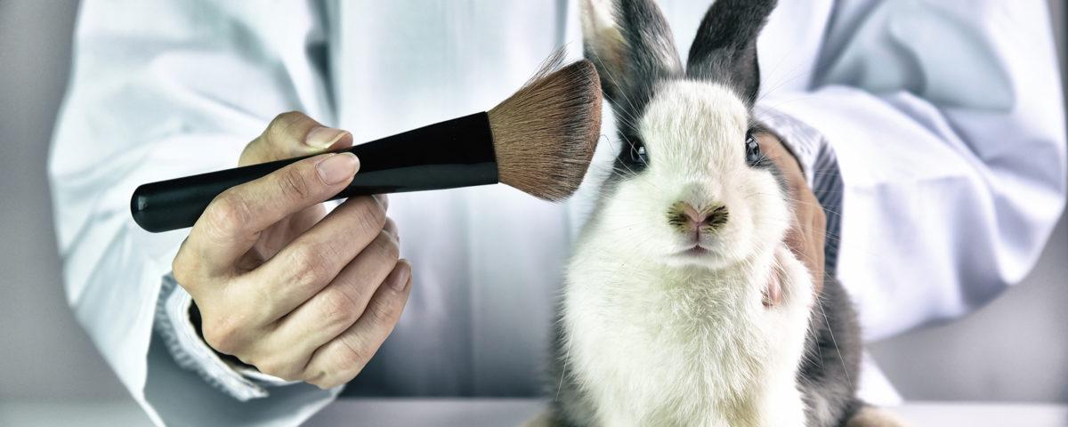 testy na zwierzętach-CodziennikKosmetyczny.pl