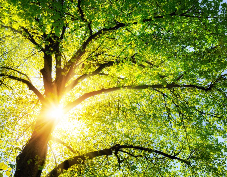 Właściwości kosmetyczne drzew – które surowce roślinne pozytywnie wpływają na cerę trądzikową?_Więcej na CodziennikKosmetyczny.pl